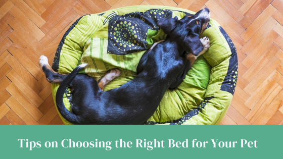 Tips on Choosing the Right Bed for Your Pet