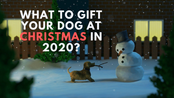 What To Gift Your Dog at Christmas in 2020?