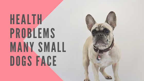 Health Problems Many Small Dogs Face