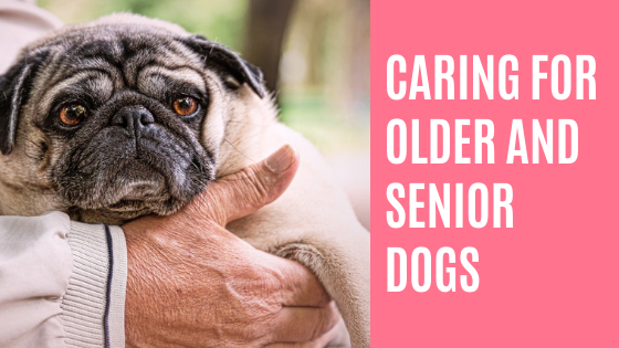 Caring for Older and Senior Dogs