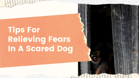 Tips for Relieving Fears in a Scared Dog