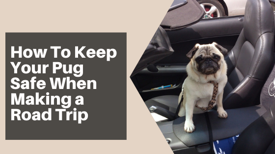 How To Keep Your Pug Safe When Making a Road Trip