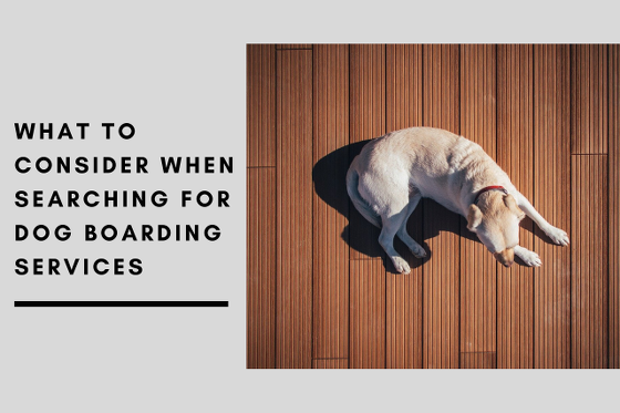 What to Consider When Searching for Dog Boarding Services