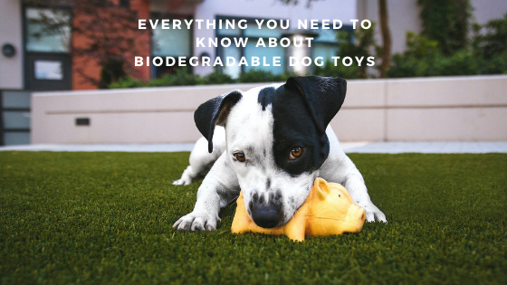 Everything You Need to Know About Biodegradable Dog Toys